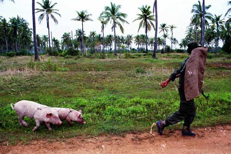 soldier_with_pigs_01