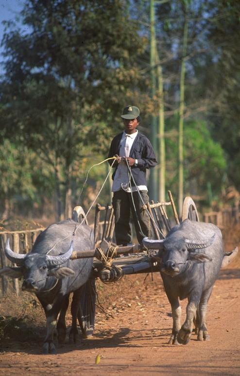 oxcart_100