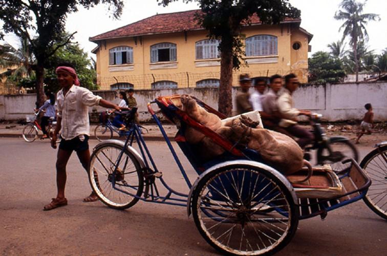 cyclo-&-pig